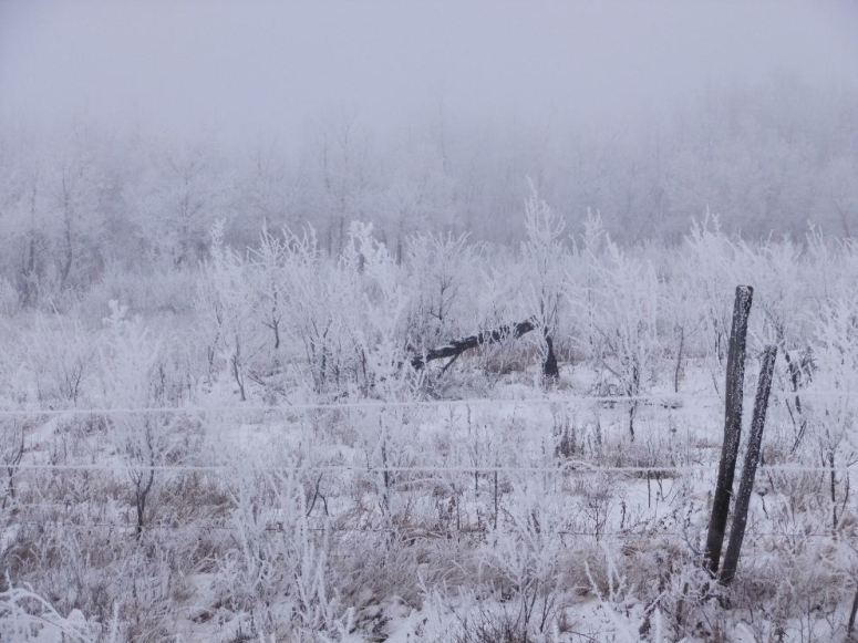 hoarfrost-and-fog-r