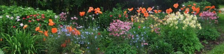 banner spring perennials