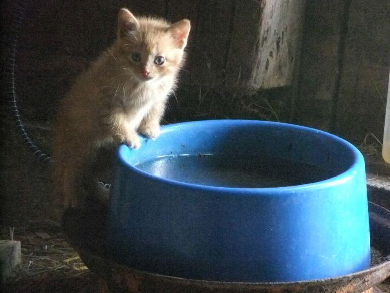 Kitten gets brave