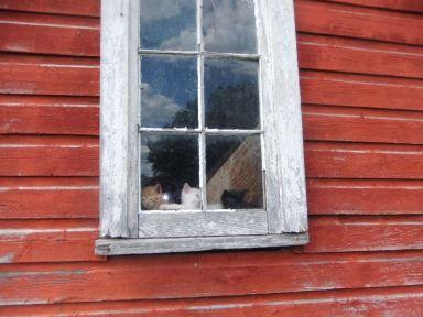 kittens in window 1