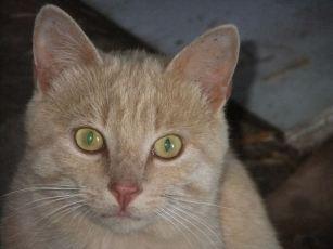 orange cat gets friendly
