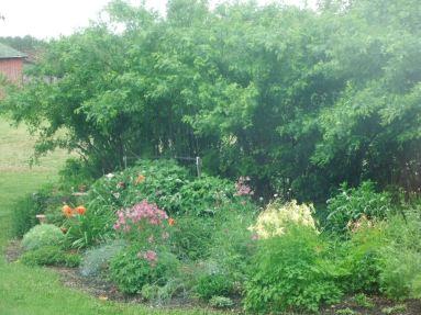 rainy day droopage