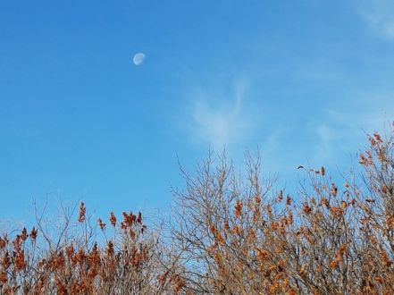 moon in day