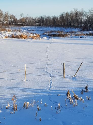 tracks across pond 1
