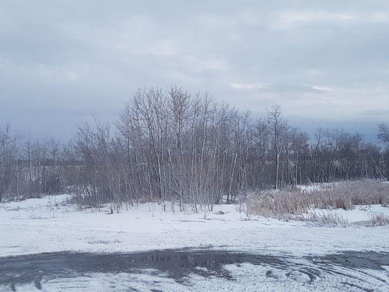 snowed again