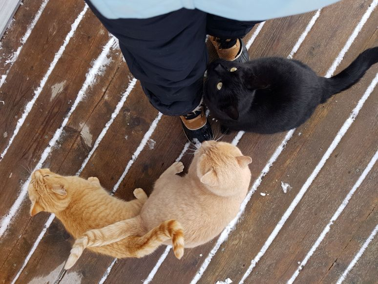 friendly cats